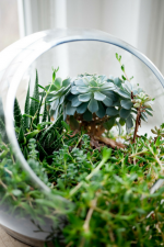 The Easiest Way to Bring Nature into a Montessori Environment