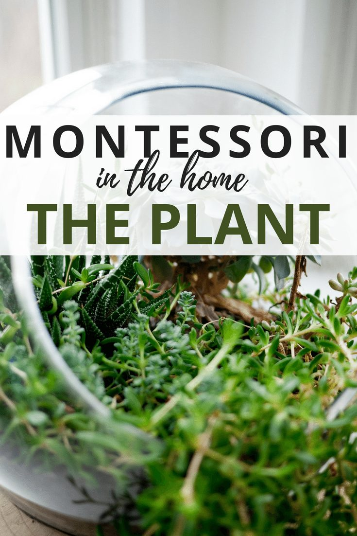 Montessori at Home - The Plant