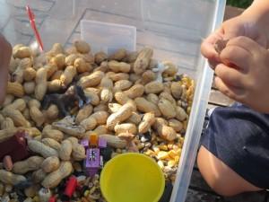 peanuts 300x225 Farm Themed Sensory Tub