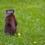 Learn Fun Groundhog Day Activities