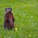 Learn Fun Groundhog Day Activities