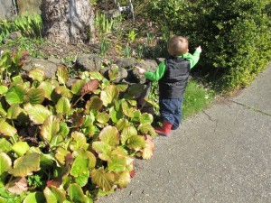 Red Color Hunt Toddler and Preschool Spring Activity