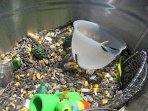 bird seed spring sensory tub 300x225 DailyBuzz Moms 9x9 :: Earth {A Play Date}