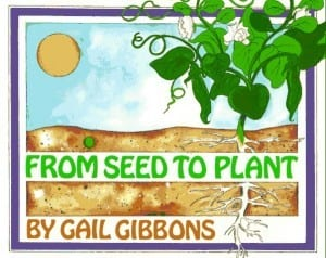 from seed to plant 300x238 How A Seed Grows
