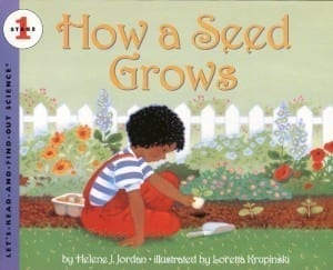 how a seed grows 300x243 How A Seed Grows