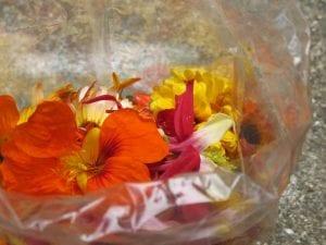 flowerchallengetastetest