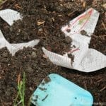 How to Make A Magic Seed Star Garden Activity for Kids