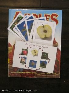 lifecycleofanapple 225x300 Apple Activities and Crafts