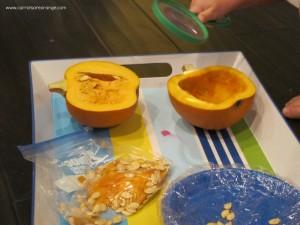 pumpkinexploration 300x225 Pumpkin Activities for Preschoolers