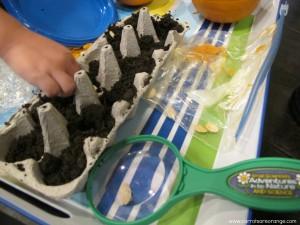 pumpkinseedplanting 300x225 Pumpkin Activities for Preschoolers