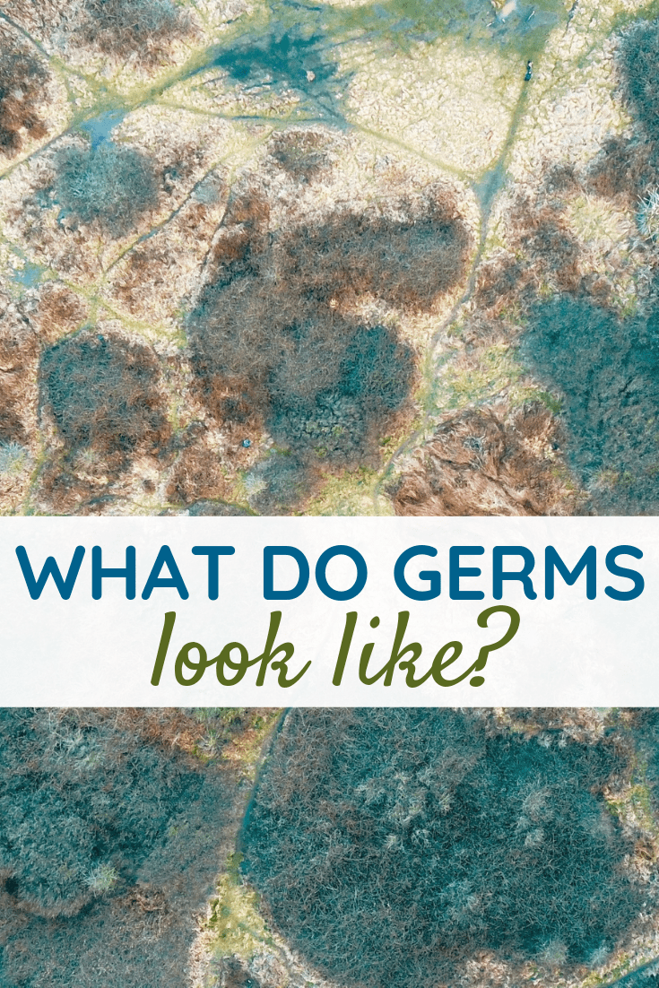 What Do Germs Look Like?