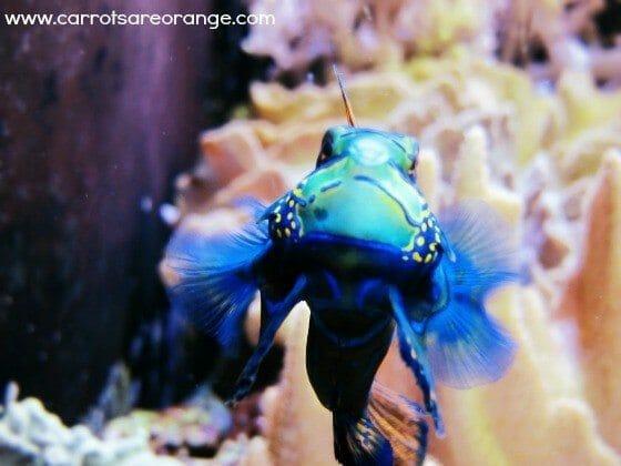 invertebratesinvertebratesforpreschoolers