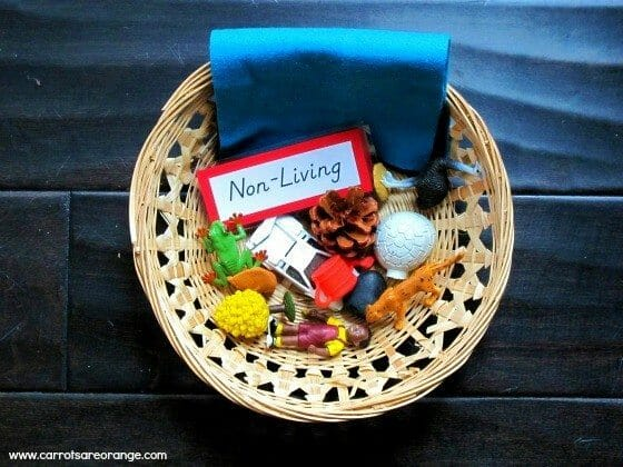 Living Non-Living Lesson: Montessori Zoology