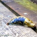 Preschool Zoology – All About Slugs
