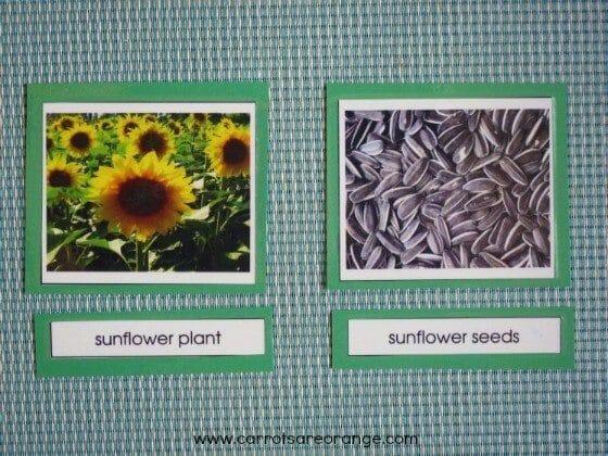 preschool botany activity with seeds