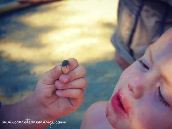 bug up close Learning in Nature with Children