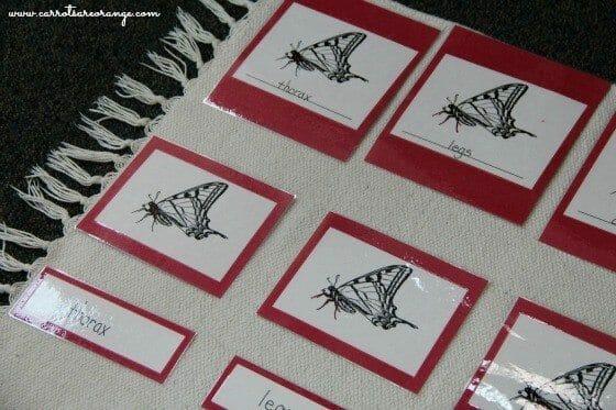 nomenclature_cards