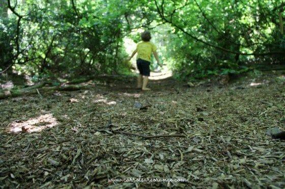 trail_cedarsong