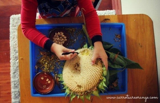 Fine Motor Activity with Sunflowers