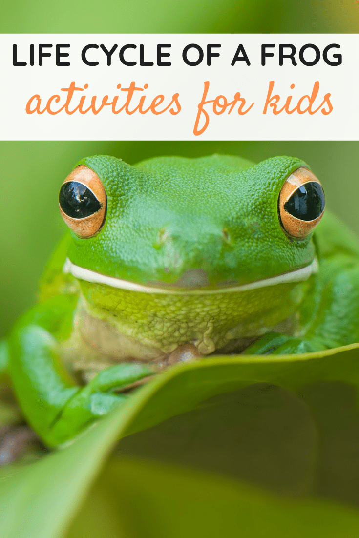 Life Cycle of a Frog for Kids Activities