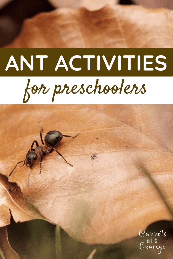 Super Fun & Easy Ant Activities for Preschoolers