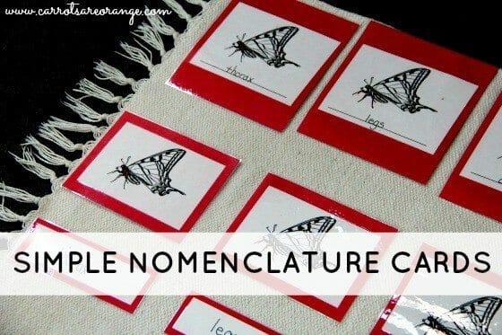Montessori Language Lesson with Nomenclature Cards