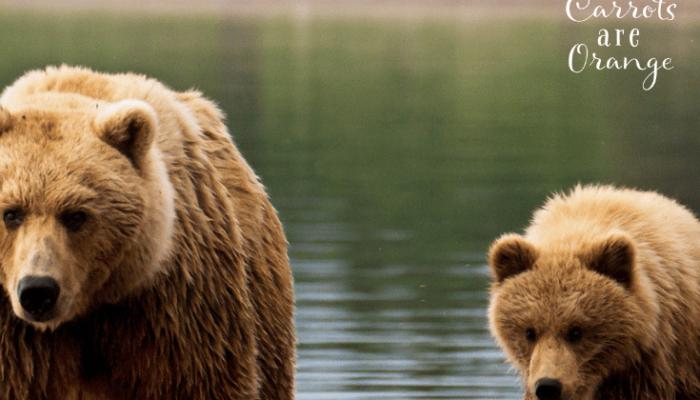 Dozens of Bear Activities for Preschoolers