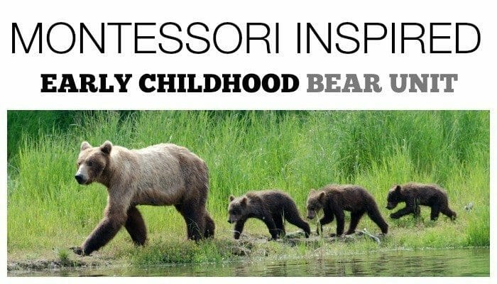 Montessori Inspired Bear Unit