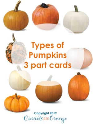 Types of Pumpkins - 3 Part Cards