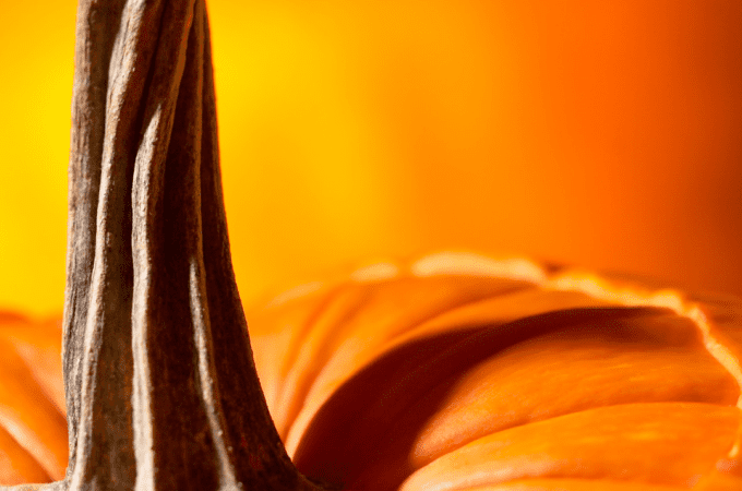 The Stem of a Pumpkin - Parts of a Pumpkin