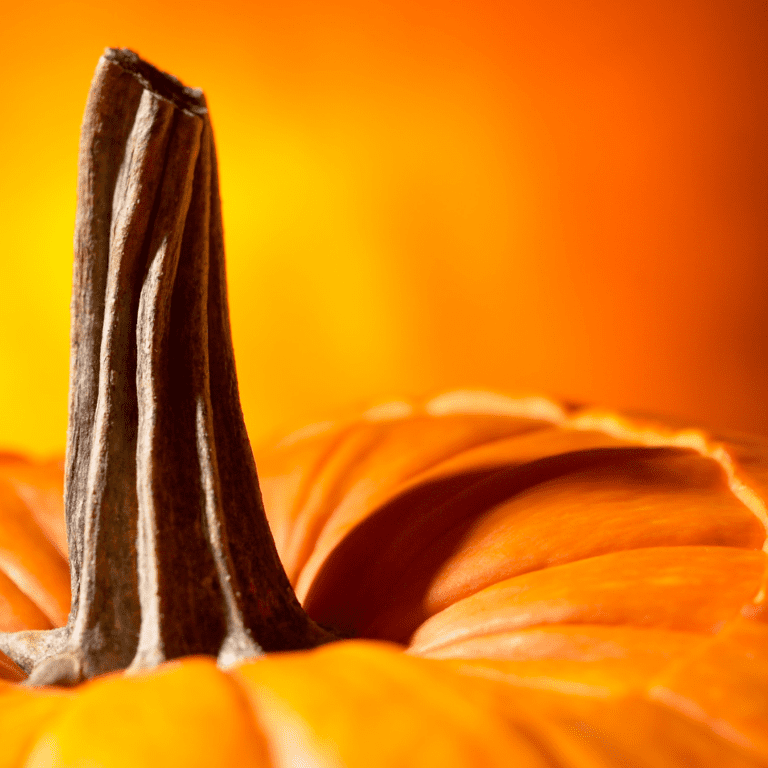 The Stem of a Pumpkin - Parts of a Pumpkin