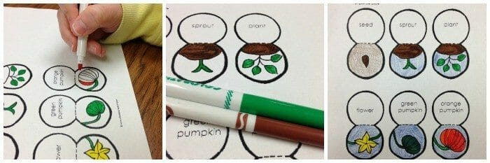Lifecycle of a Pumpkin Printable