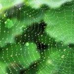 Exploring Spider Webs