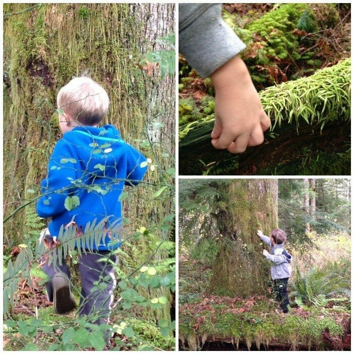 Kids Forest Discovery