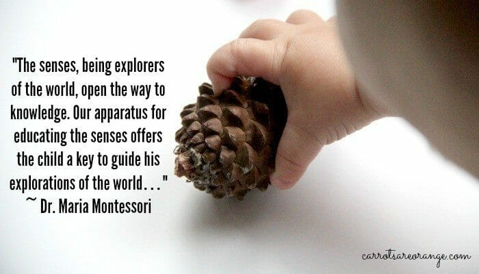 Montessori Senses Quote