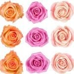 Rose Crafts & Activities for Kids