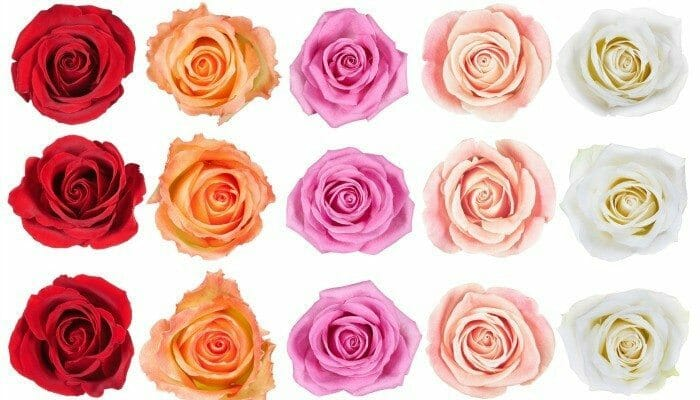 How to Make a Paper Rose & Other Rose Crafts for Kids