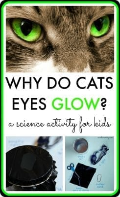 Why Do Cats Eyes Glow