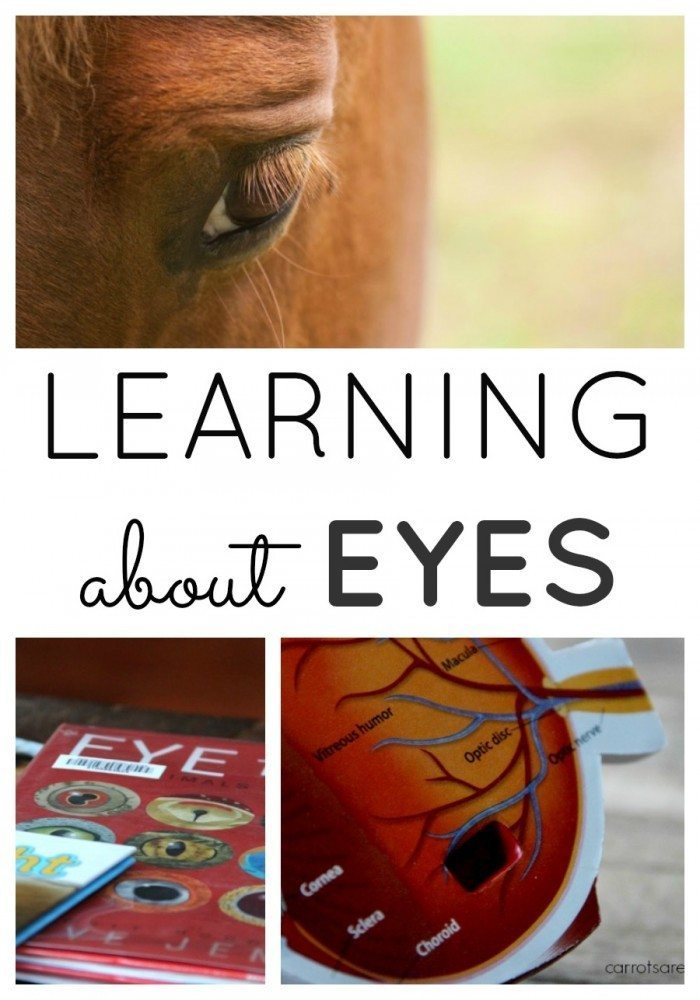 Learn About Animal Eyes