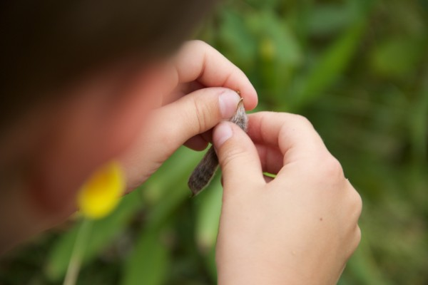 Counting Seeds from a Pod