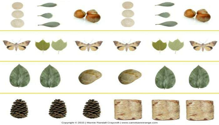5 Montessori Math Nature Activities with Math Printables