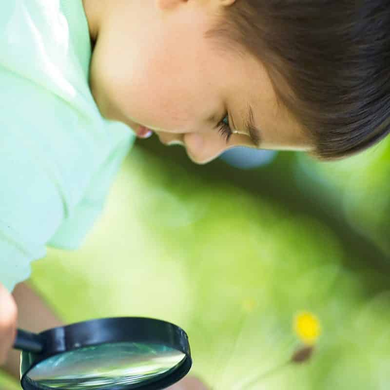 Awesome Botany Activities for Kids