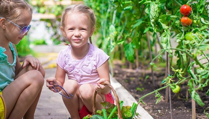 Garden Planner – A Perfect First Step in Gardening with Kids