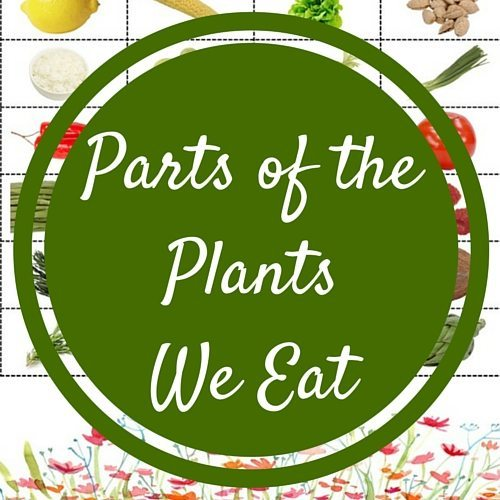 Parts of the Plants We Eat
