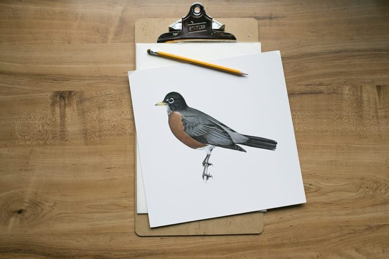 Robin Tracing Spring Shelves