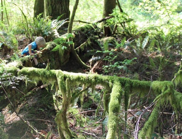 children in nature climb