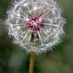 12 Unique & Creative Activities with Seeds