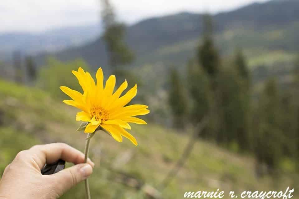 mom wildflower