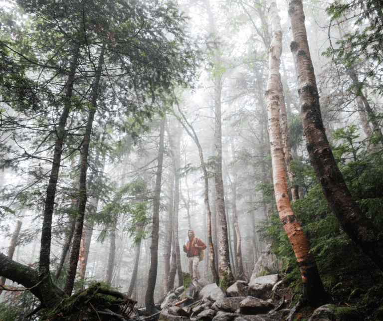 A person standing in the fog in the forest