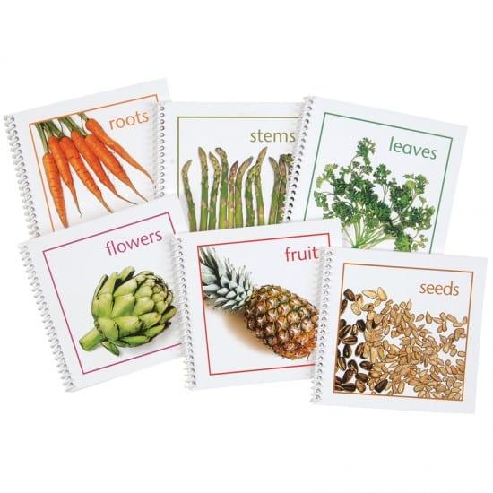 Montessori Services Plants We Eat